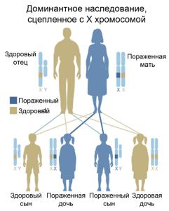 TreeGene_dominantX